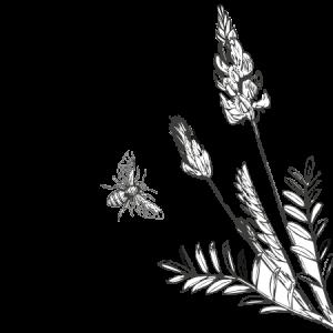 Intro-Illustration-Sanfoin-Bee